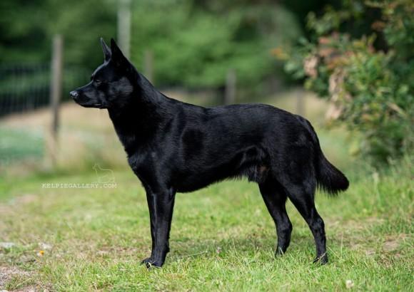 Red Hope Blackbull